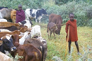 Herdboys watch over their cattle in Tanzania