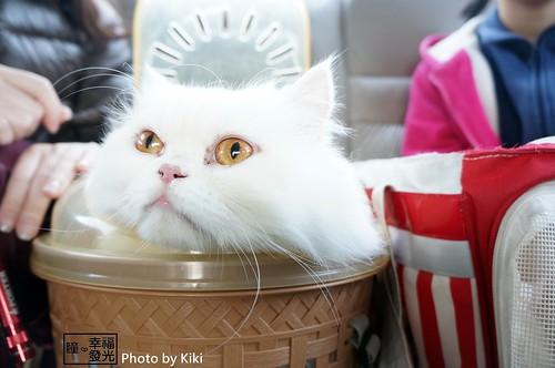 cat_5th (25)