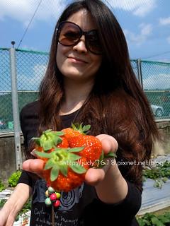 關西大根草莓園