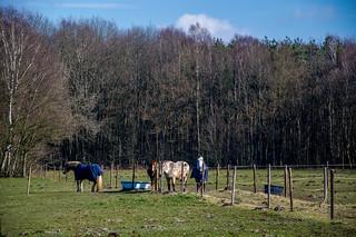 Horses - Zutendaal