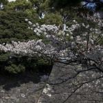 0404_chiyoda-15