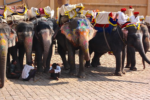 elephans and their mahouts wait for a job