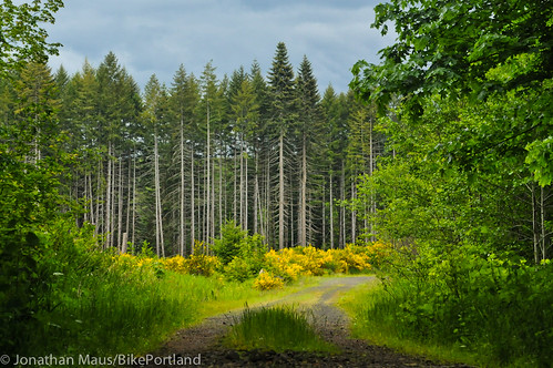 Burn Road Loop in Vernonia-39