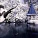 The Botanical White by shontz photography