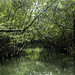 Through Mangroves