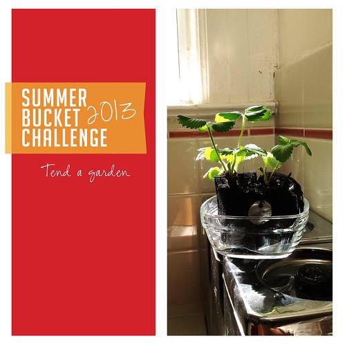 Summer Bucket List Challenge 2013: Tend a Garden