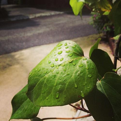 雨あがった