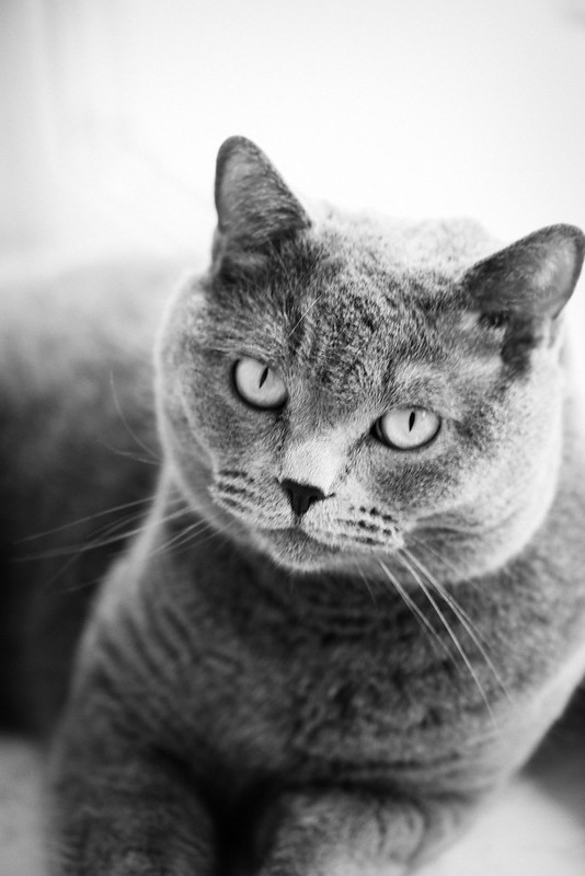 My lovely cat in black and white