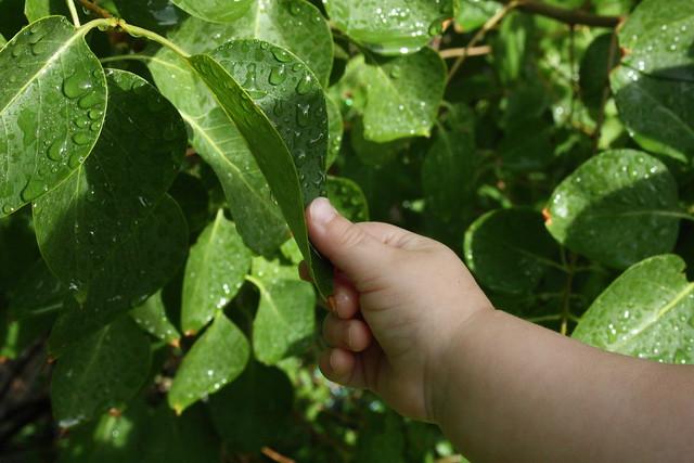 elise grabbing leaf