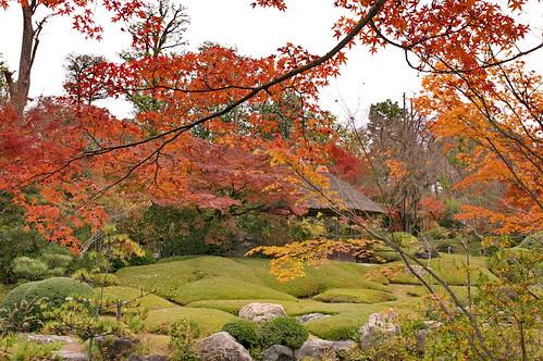 【写真】紅葉 : 退蔵院