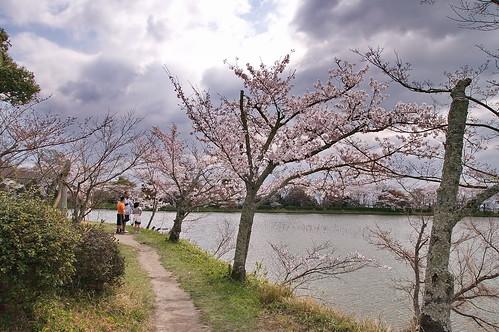 【写真】2013 桜 : 大覚寺/2020-09-15/IMGP9424