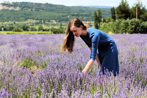Millay in lavender_1542