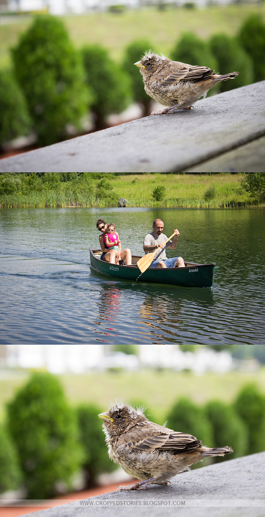 BABY BIRD and CANOE RIDE COLLAGE