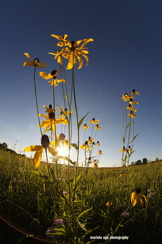 park flowers sunset summer sky sun nature grass sunshine backlight evening meadow fisheye damn sunstar coth supershot thegalaxy fantasticnature alittlebeauty coth5 thesunshinegroup sunrays5