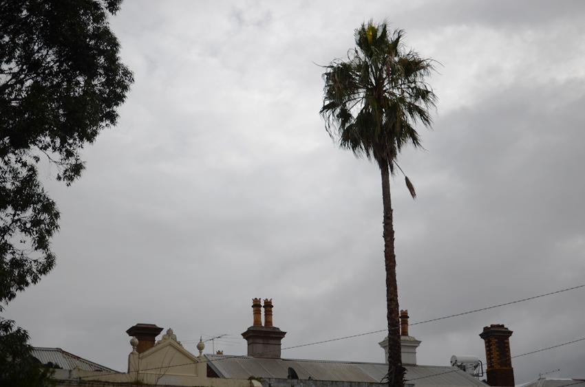 palm tree grey sky melbourne