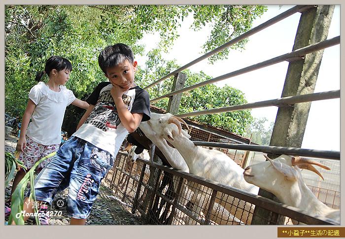 益健羊乳場27