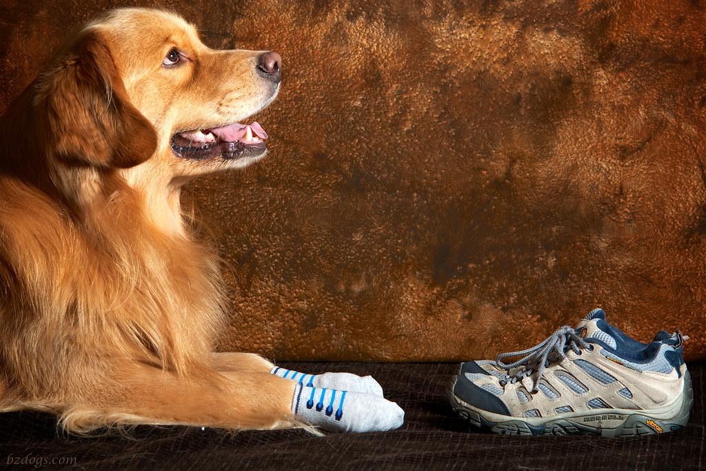 Henry in Socks