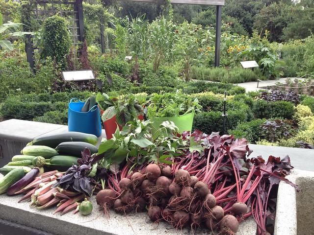 In mid-summer, cucumbers, okra, beets, okra, amaranth, and basil were abundant. Photo by Caleb Leech.