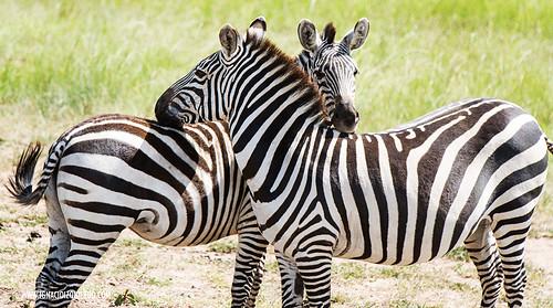 Kenia - Masai Mara 52