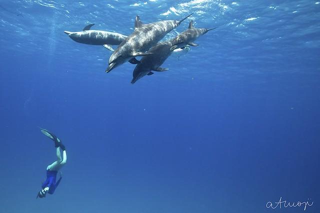 Bimini Dolphin Swim - 23/2013