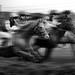 Pure Horsepower by Chrisnaton