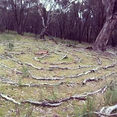 Solitary maze walk #canberra #mtainslie