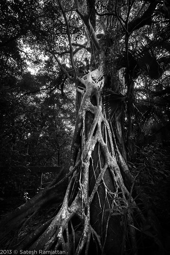 trees fern tree forest landscape satesh longpinekey peaceinart
