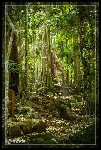 forest rainforest path australia falls queensland curtis sunbeams crepuscular tamborine abcopen:project=top3