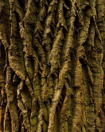 thüringen flora natur ek tyskland träd hainich schönstedt