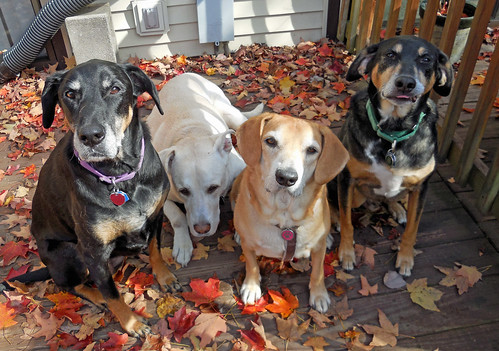 4dogs_101413c