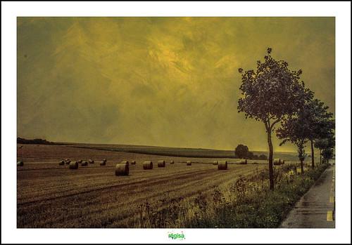 BOCAGE AUDOMAROIS by régisa