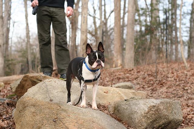 Charlie Powhite Hike Feb 2 (28)