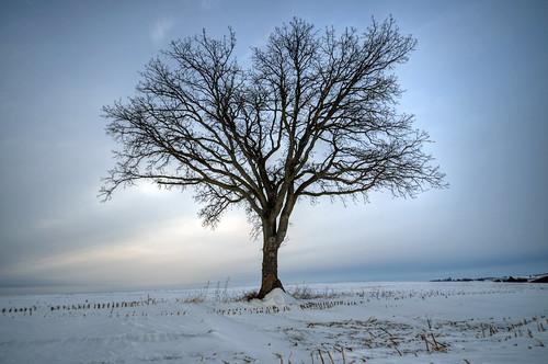 winter tree nature wisconsin landscape nikon deforest nikond5100 jakerost