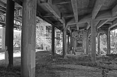 Shepherd Drive & South Shepherd Drive Bridges over Buffalo Bayou, Houston, Texas 1402151253bw