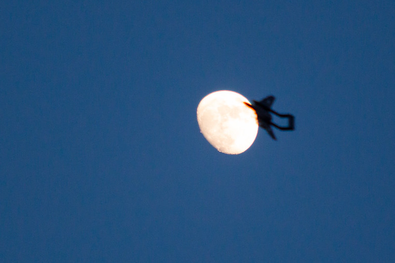 The moon eating Phil's Sea Vixen