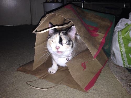 Bag of Squeakies Tinny