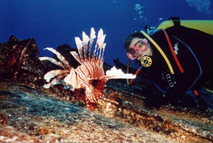 Lion Fish and Diver