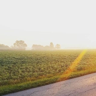 Early Bird catches the sunrise over the misty soybeans. Or something.