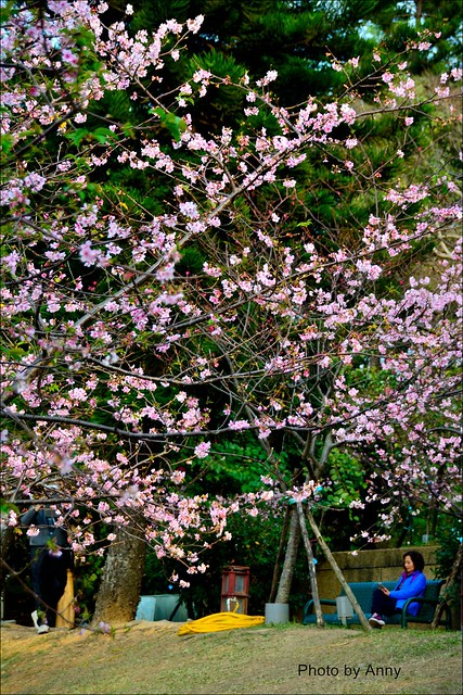 麗池櫻花18