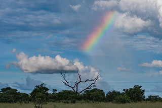 Regenbogen in der Linyanti-Region