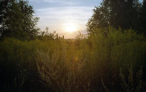 sunset sun slr nature field forest vintage landscape poland polska 35mmfilm analogphotography singlelensreflex czestochowa częstochowa prakticabc1 simstorm