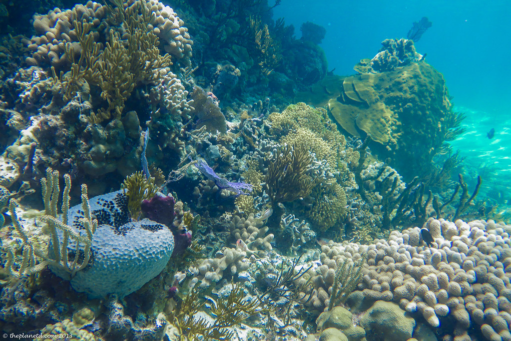 coral snorkelling