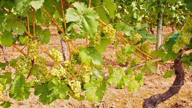 Domaine de Chaberton Estate Winery   Langley Passport Wine Tour