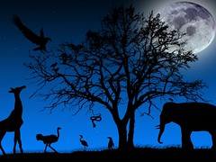 animals_at_night-1024x768