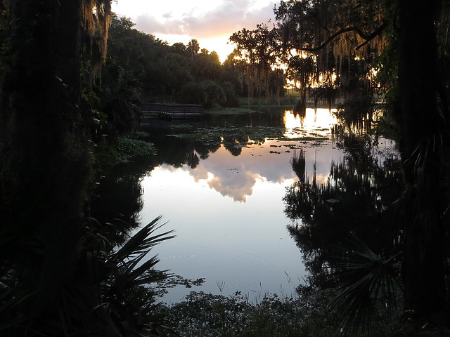 morning at Gemini Springs