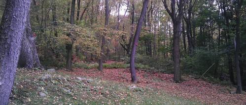 autumn trees woods october afternoon schuylkillcounty 2013 girardville geeezelouise