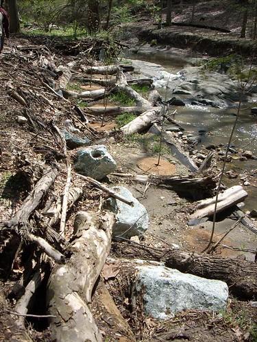 Image of Woody Debris