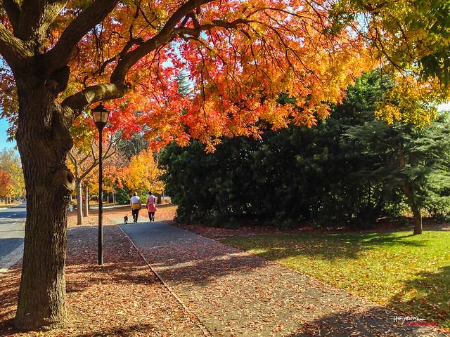 2013-11-10 Autumn-5160