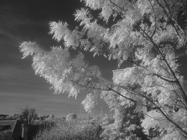 Hacked Infrared Panasonic DMC-FS3