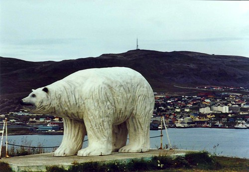 Isbjørn, Hammerfest